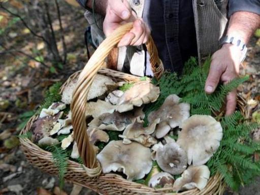 Malore fatale per un cercatore di funghi